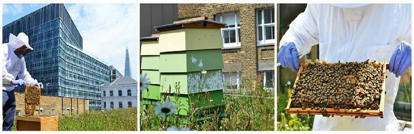 Beehives at Hilton Bankside