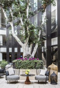 Courtyard dominated by striking tree