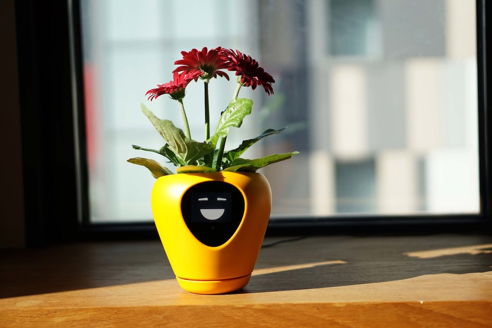 Image of yellow plant pot with a happy face and plant inside