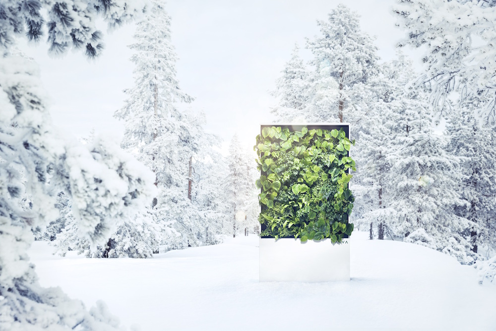 Living wall in a winter setting
