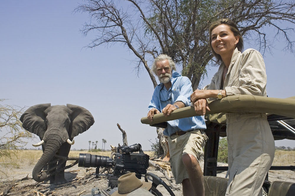 Dereck and Beverly Joubert, filmmakers and wildlife photographers, in a 4x4 with an elephant in the background