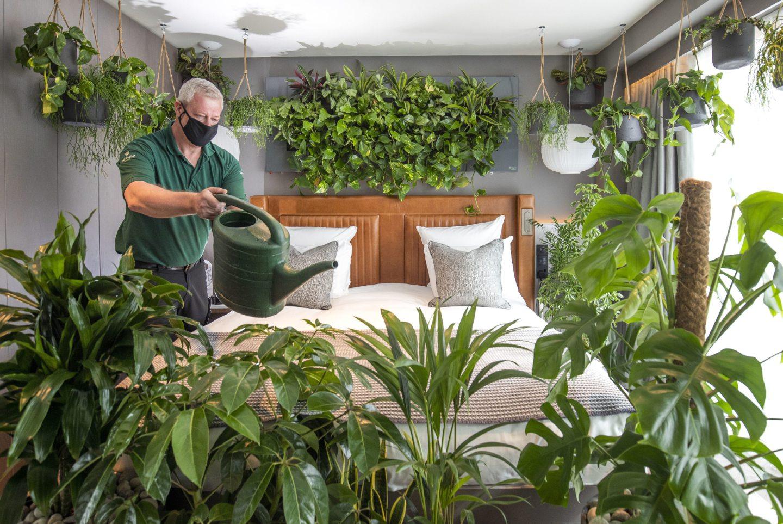 Man watering plants in hotel room